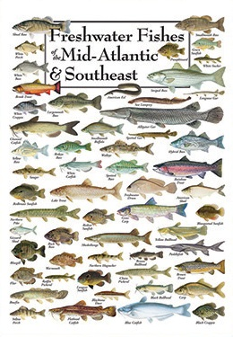 PS18 Freshwater Fishes Of The Mid Atlantic And Southeast Price 1695 Each Quantity