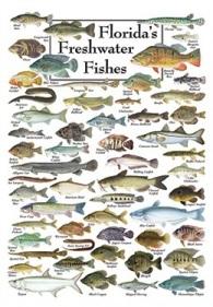 Freshwater Fish Florida Florida Fresh Water Fishing